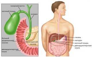 Желчный пузырь симптомы лечение народными средствами