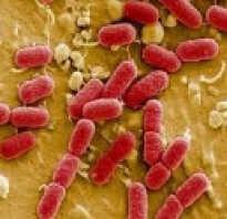 Кишечная инфекция у детей симптомы и лечение рвота понос