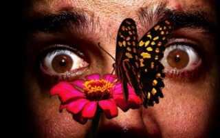 Боязнь бабочек лечение
