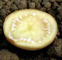 Картофель болезни лечение